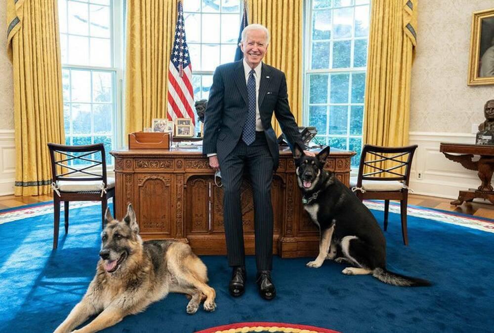 Chó cưng của ông Joe Biden phải rời Nhà Trắng sau khi lao vào cắn nhân viên an ninh