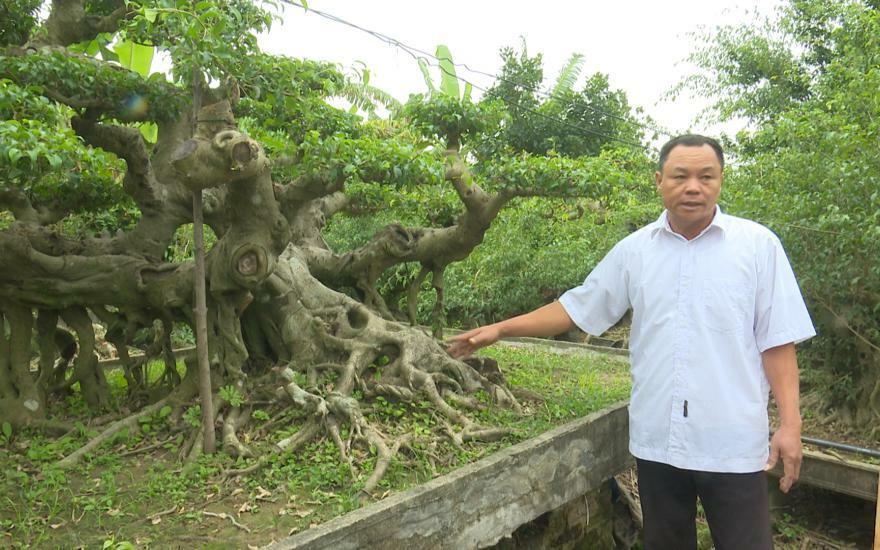 """Cận cảnh dàn sanh cổ thế lạ, giá """"khủng"""" của anh nông dân Thái Bình"""