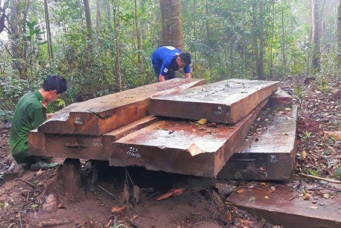 """Đắk Lắk: Thêm vụ phá rừng lớn, lâm tặc để """"quên"""" hàng chục khối gỗ"""