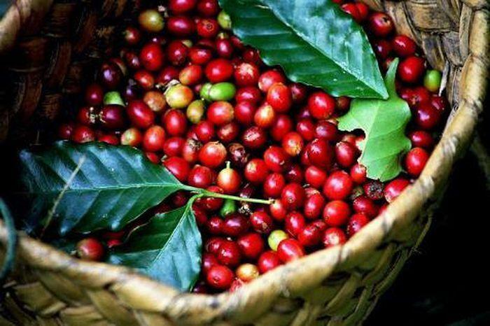 Giá cà phê hôm nay 15/3/2021: Chững giá ở thị trường trong nước