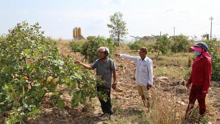 Bụi đá làm hư vườn điều của người dân xã Ia Lốp, Đắk Lắk