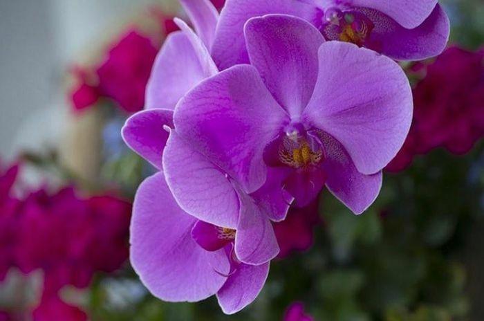 Những điều thú vị về hoa lan không phải ai cũng biết