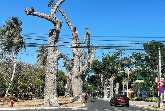 Cưa cây cổ thụ làm đường khiến người dân phản ứng, Bí thư Thành ủy nhận khuyết điểm