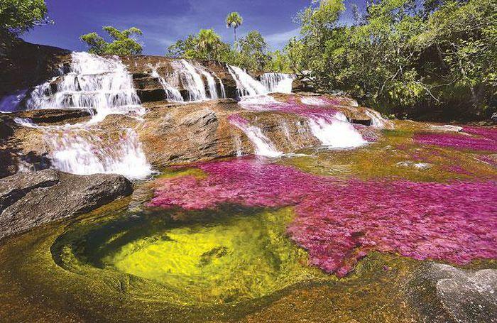 Cano Cristales – kỳ quan thiên nhiên của Colombia