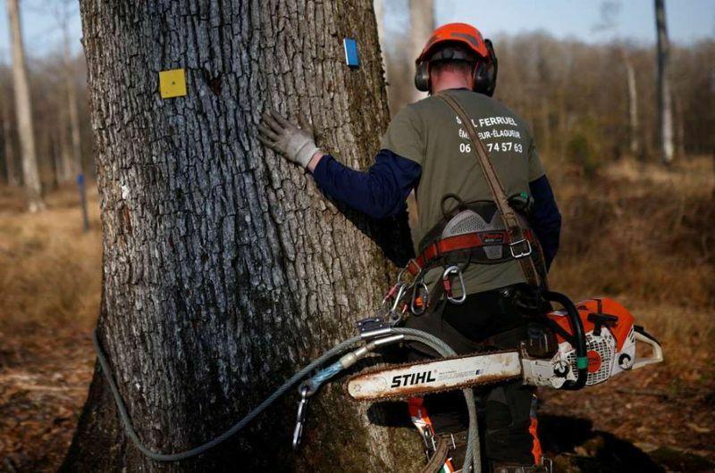 Pháp đốn rừng sồi xây lại tháp của Nhà thờ Đức Bà Paris