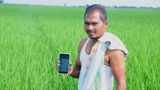 """Nông dân thời 4.0: Chụp ảnh rồi """"bắt sâu"""" bằng… điện thoại di động"""