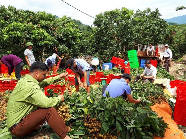 Phát triển hợp tác xã gắn với giảm nghèo và xây dựng nông thôn mới