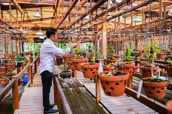Ông chủ Nguyễn Văn Toán chia sẻ kinh nghiệm chăm lan dù là tay ngang
