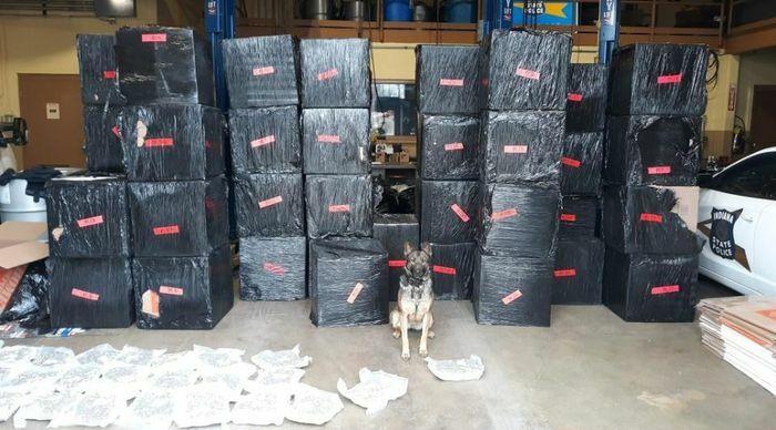 Cảnh sát bắt giữ hơn nửa tấn cần sa nhờ một chú chó nghiệp vụ