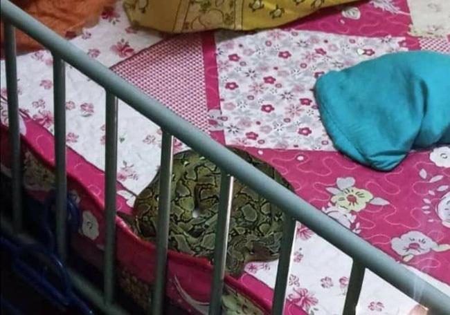 """Vào giường kiểm tra con ngủ, mẹ thấy vật thể lạ có hoa văn sáng bóng trên vai con để rồi """"thất kinh bạt vía"""" ôm con chạy"""