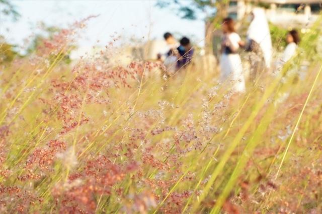 """Hội """"bánh bèo"""" xốn xang trước đồng cỏ hồng thơ mộng mới toanh tại Đà Nẵng"""