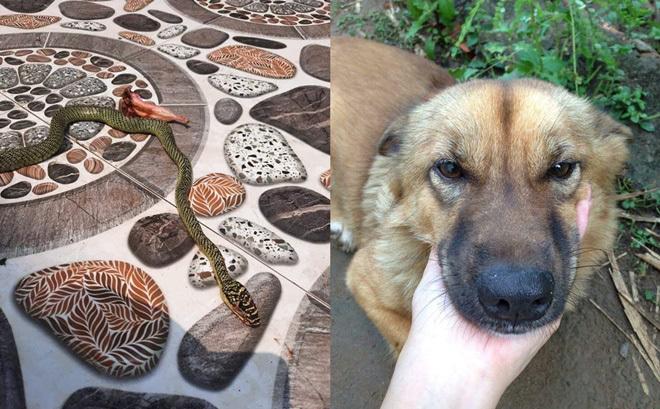 Thấy rắn bò vào giường, chú chó lao tới cứu chủ thoát nạn trong gang tấc: Cả nhà dậy nhìn hiện trường mà run rẩy