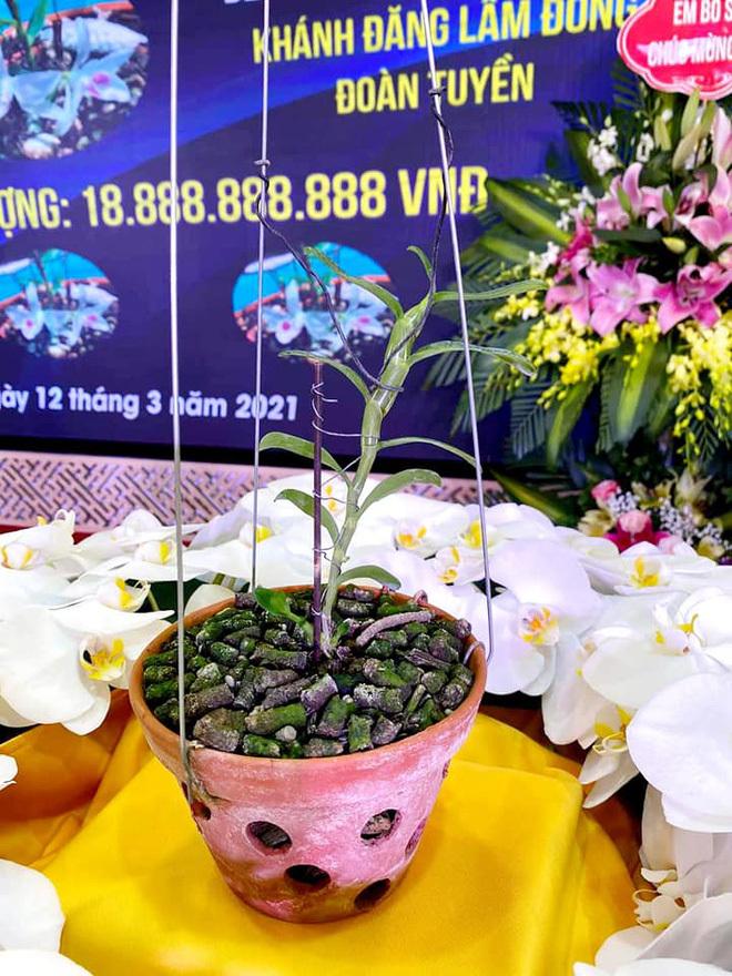 Xôn xao hình ảnh buổi lễ nhượng bán hoa lan 5 cánh trắng với giá gần 19 tỷ đồng ở Hà Nam