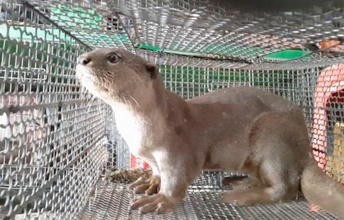 """Bảo vệ các loài động vật hoang dã vì """"ngôi nhà chung"""" đa dạng sinh học"""