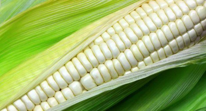 Ngô biến đổi gen giúp tăng cường an ninh lương thực ở châu Phi