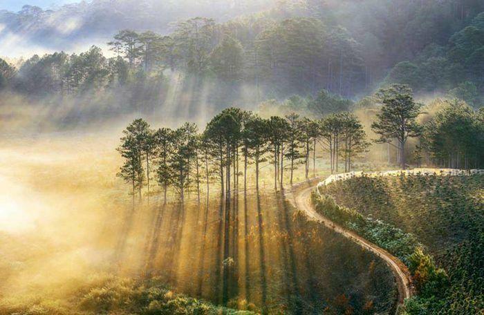 Lâm Đồng cho đấu giá thuê rừng để làm du lịch sinh thái