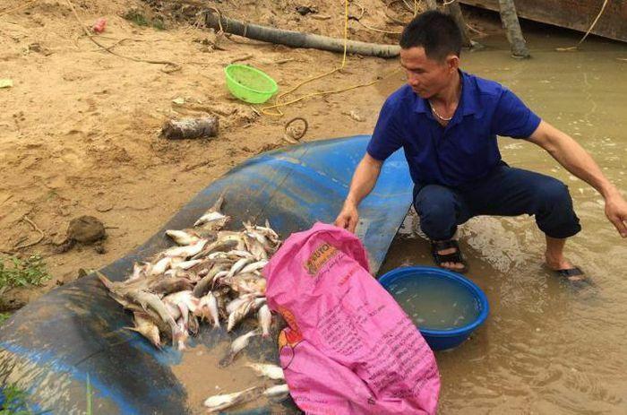 """Cá chết nổi trắng trên sông Con: Rà soát các cơ sở sản xuất, truy """"thủ phạm"""""""