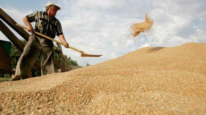 Những vấn đề nảy sinh quanh chuyện bảo hộ lúa mì của Nga