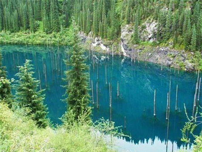 8 khu rừng nổi tuyệt đẹp trên mặt nước