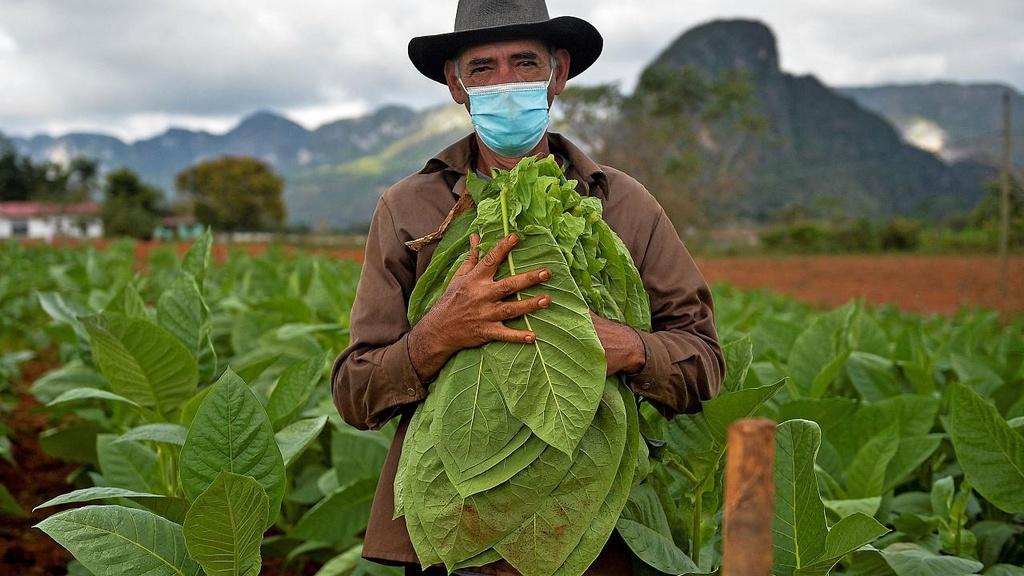 Chủ khách sạn ở Cuba chuyển sang làm nông nghiệp để mưu sinh