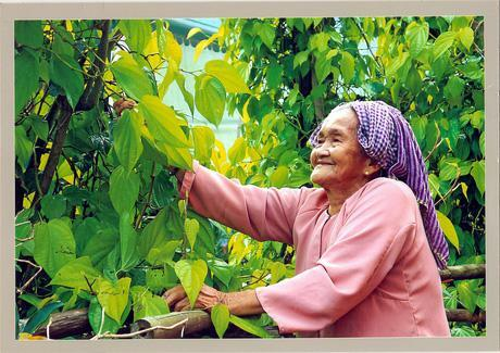 """Hậu Giang: """"Vương quốc"""" của loại lá có vị cay nồng, càng ăn càng say, ăn hoài không no"""