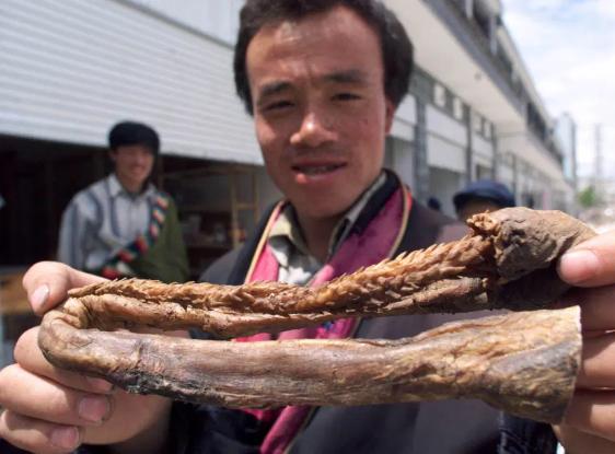 Thịt thú rừng: Hiểm hoạ tiềm tàng khủng khiếp hơn cả COVID-19