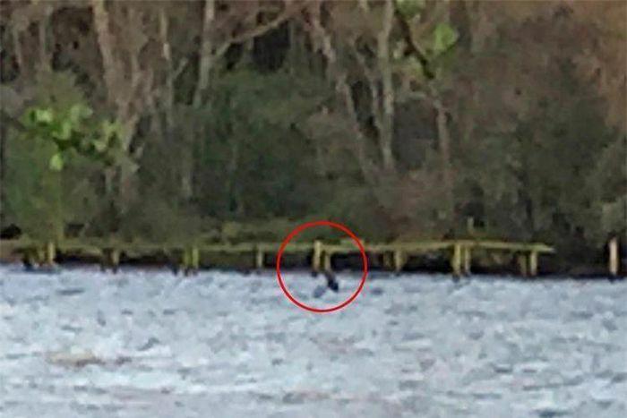 Quái vật hồ Loch Ness bất ngờ xuất hiện sau 9 tháng mất tích?