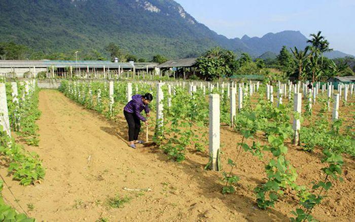 Hà Giang đổi mới mô hình kinh tế vườn