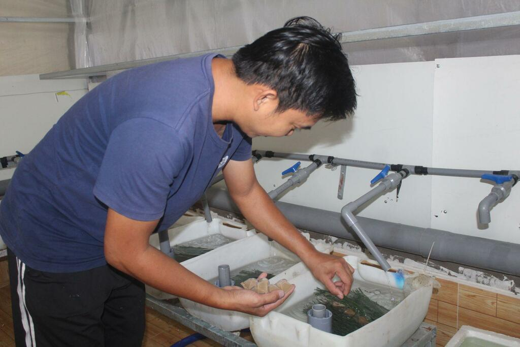 Long An: Nuôi lươn giống công nghệ cao, mỗi tháng vớt lên 100.000 con lươn mà không đủ bán