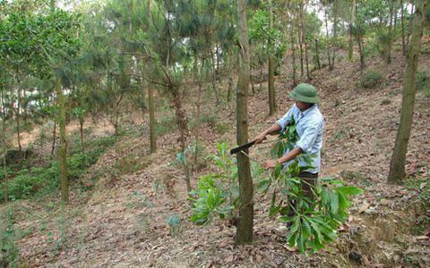 Được giao trồng mới 1,5 triệu cây xanh, Bắc Ninh lo không… có đất để trồng