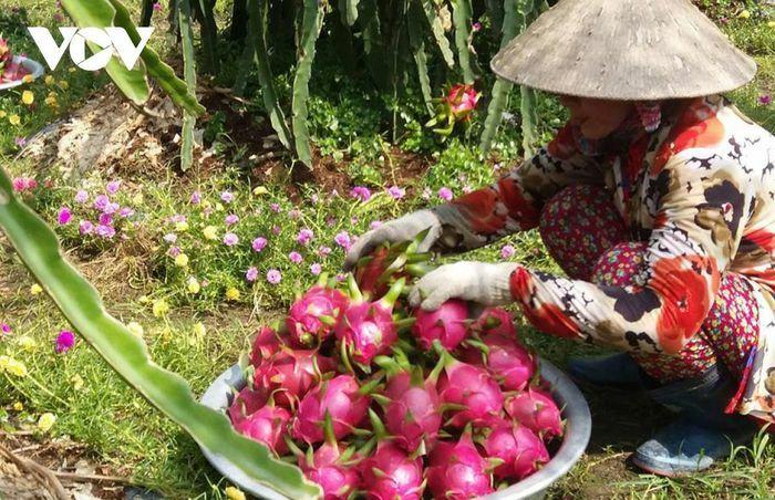 Trung Quốc tăng thu mua, nhiều loại trái cây hút hàng, tăng giá