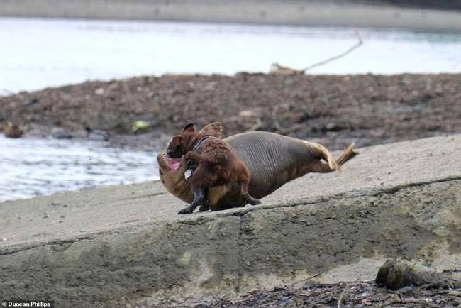 """Cái chết của chú hải cẩu 9 tháng tuổi khiến nước Anh thương tiếc: Bị chó dữ """"nhà giàu"""" tấn công dữ dội tạo nên cảnh hiện trường đẫm máu"""