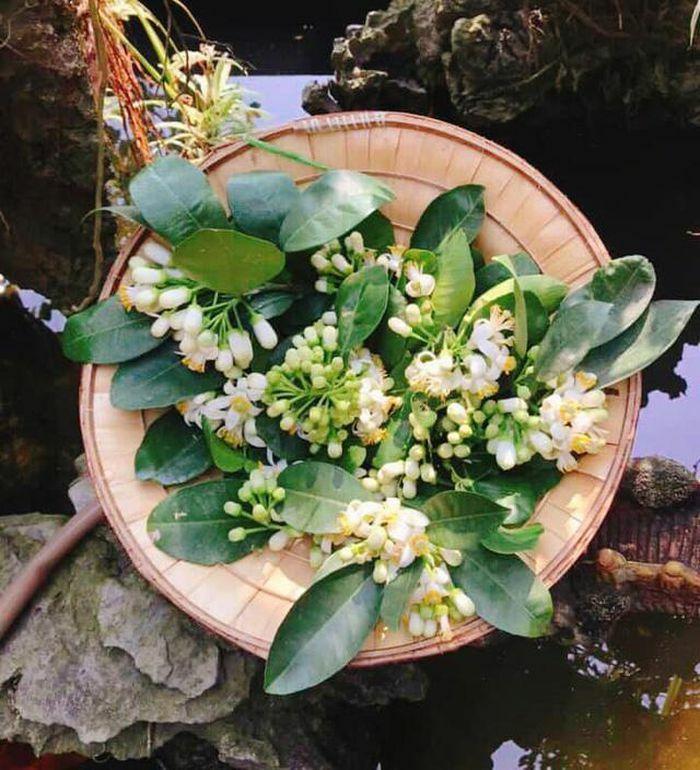 Hoa bưởi đang nở rộ không chỉ để cắm, làm thứ này đảm bảo cả mùa hè thơm mát và ngát hương