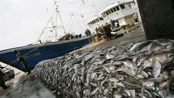 Các đội tàu cá Trung Quốc phát thải khí CO2 hàng đầu thế giới