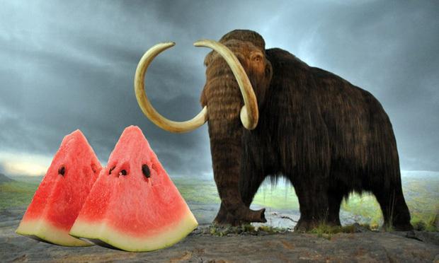 Có 1 loại quả xuất hiện trước cả khi voi ma mút tuyệt chủng, ngày nay lại có mặt trong vô vàn bữa tiệc