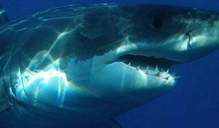 Bí ẩn về loài cá mập khổng lồ thời tiền sử