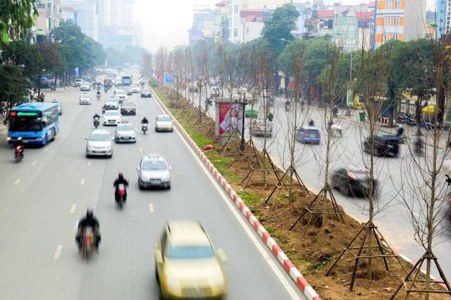 Phong lá đỏ: Từ kỳ vọng đẹp như trời Âu đến cành củi khô giữa Hà Nội