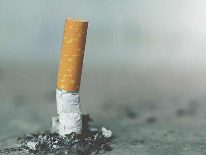 Thuốc lá có thể biến mất trong khoảng 20 năm tới