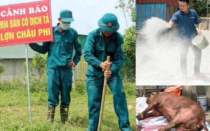 Nghệ An: Tiêu hủy hàng trăm tấn lợn bị dịch tả Châu Phi tại huyện Thanh Chương