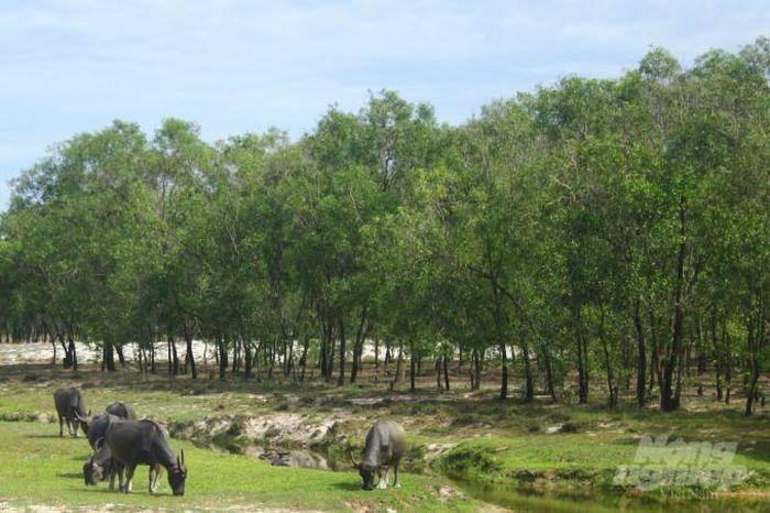 Chuyển đổi 360ha rừng phòng hộ làm Khu công nghiệp Triệu Phú