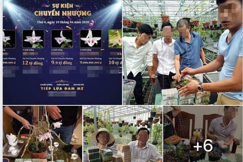 Lừa đảo bán lan đột biến: Tưới nước muối, thuốc diệt cỏ lên mầm hoa lan đột biến đã bán nhằm phi tang