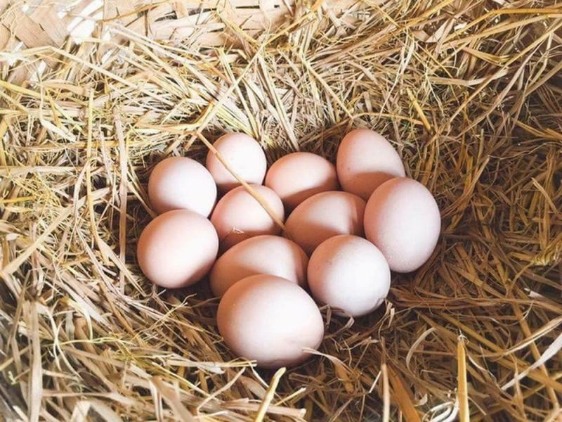 Cần từ bỏ ngay thói quen ăn trứng luộc kiểu này kẻo có ngày gây ngộ độc