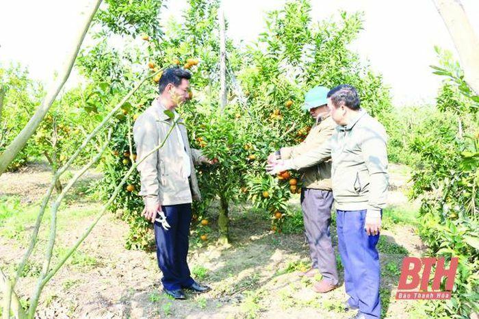 Huyện Như Xuân triển khai nhiều giải pháp thúc đẩy phát triển sản xuất nông nghiệp