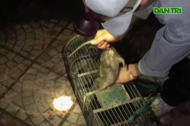Săn chuột cống - nghề