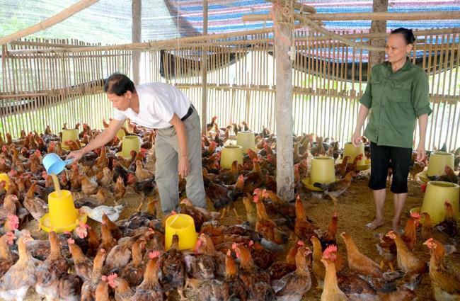 """Một năm 5 lần điều chỉnh giá thức ăn chăn nuôi: Nông dân chịu hết nổi, """"treo"""" chuồng vì lỗ"""