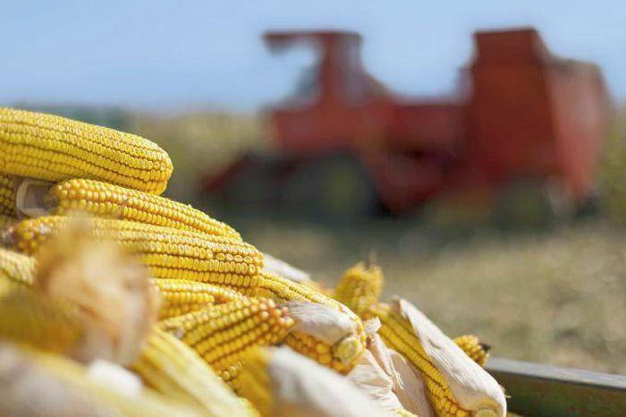 Brazil tạm ngừng áp thuế nhập khẩu ngũ cốc, ngô Mỹ và Ukraine hưởng lợi