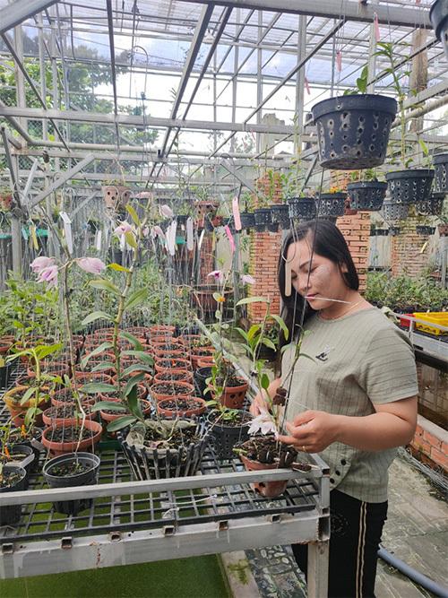Nghệ nhân Nguyễn Ngọc Phương Anh chia sẻ cách chăm sóc lan giống phát triển khỏe mạnh tại vườn