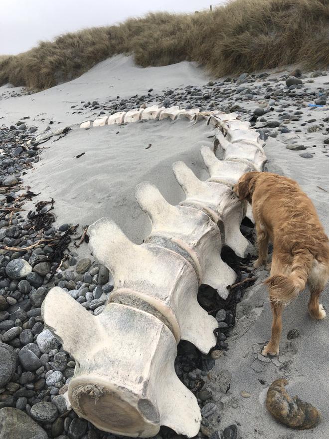 """Thực hư bộ xương khổng lồ của """"Quái vật hồ Loch Ness"""" dạt vào bờ biển Scotland gây xôn xao dư luận"""