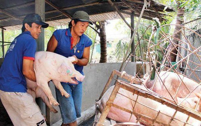 Giá lợn hơi hôm nay 5/4/2021: 2 miền Bắc – Nam biến động nhẹ