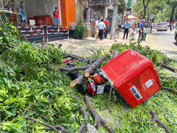 """Rùng mình nhánh cây """"khủng"""" rơi đè bẹp xe máy giao hàng Shopee ở trung tâm Sài Gòn"""